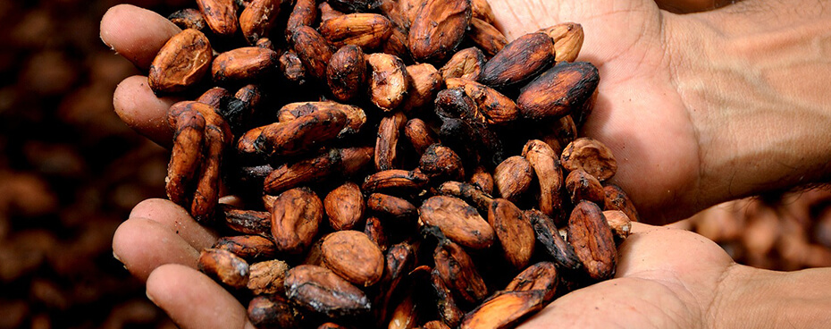 Filière cacao Jardin BiO