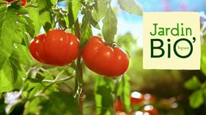 Tomates jardin bio for Jardin bio 2015