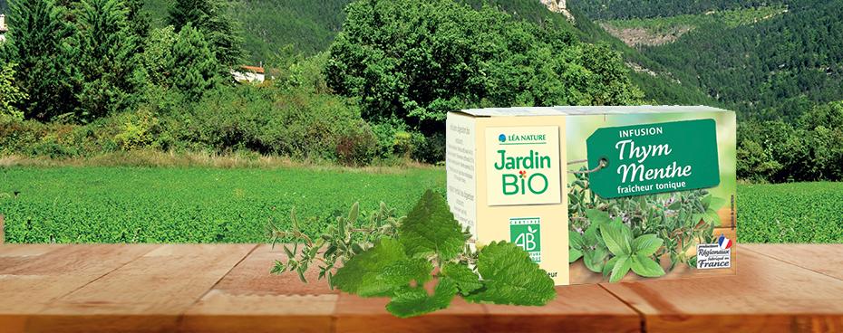 infusion-thym-menthe-jardin-bio