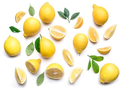 Filière citron Jardin BiO