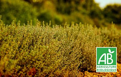 Jardin BiO étic est engagée dans une démarche bio durable