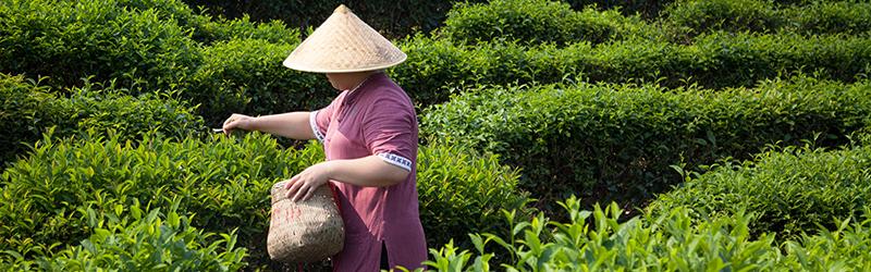 Jardin BiO - des produits équitables