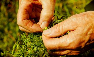 cultivateur jardin bio lentilles