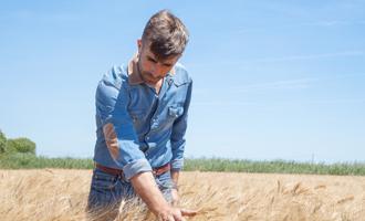 agriculteur blé
