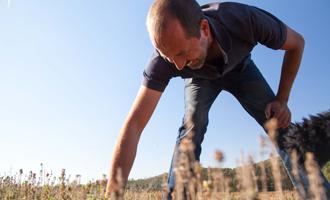 agriculteur thym citronné Jardin BiO étic