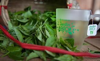 thé vert de chine jardin bio dans une tasse