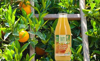 image bouteille Jardin BiO étic pur jus orange dans champs orange