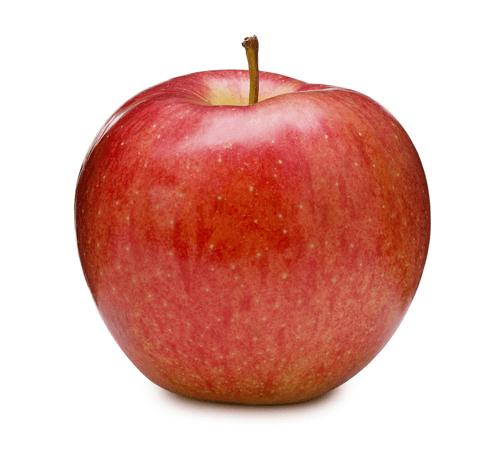 Filière pomme Aux Origines Du Goût Jardin BiO