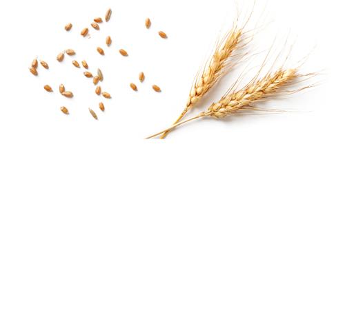 Filière blé Jardin BiO