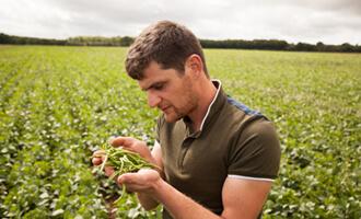 Découvrez Aurélien, producteur d'haricots verts bio pour Jardin BiO étic