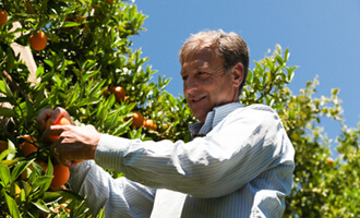 Découvrez Spyros producteur d'oranges bio en Grèce pour Jardin BiO étic