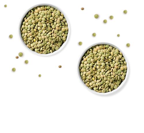 Filière lentilles vertes Jardin BiO