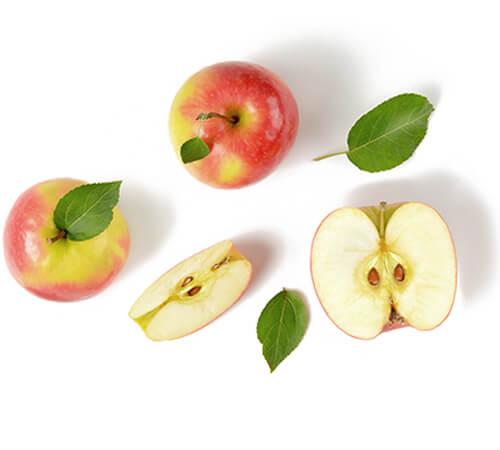 Filiere pomme Jardin BiO etic