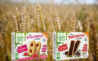 Champs de blé biscuitier