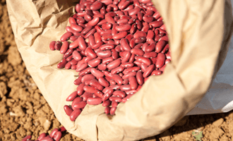 Haricots rouges bio issus de la filière bio en Vendée pour Jardin BiO étic