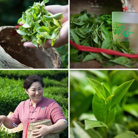 découvrez nos thés et infusions bio et équitables Jardin BiO