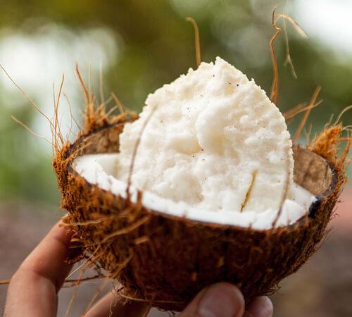 image portrait filière noix de coco Jardin BiO etic